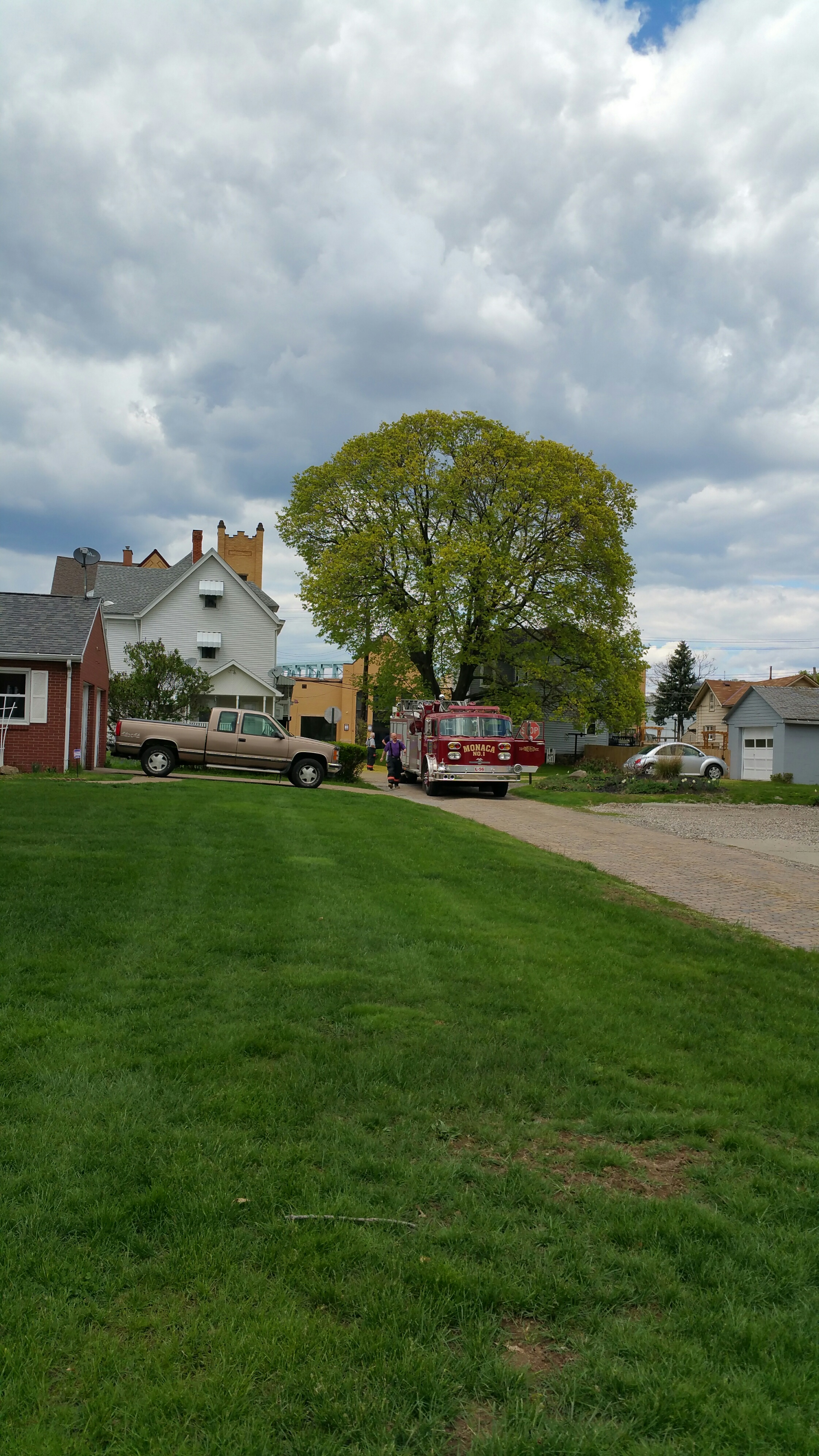 Cat Stuck in Tree on Indiana - 5/1/15